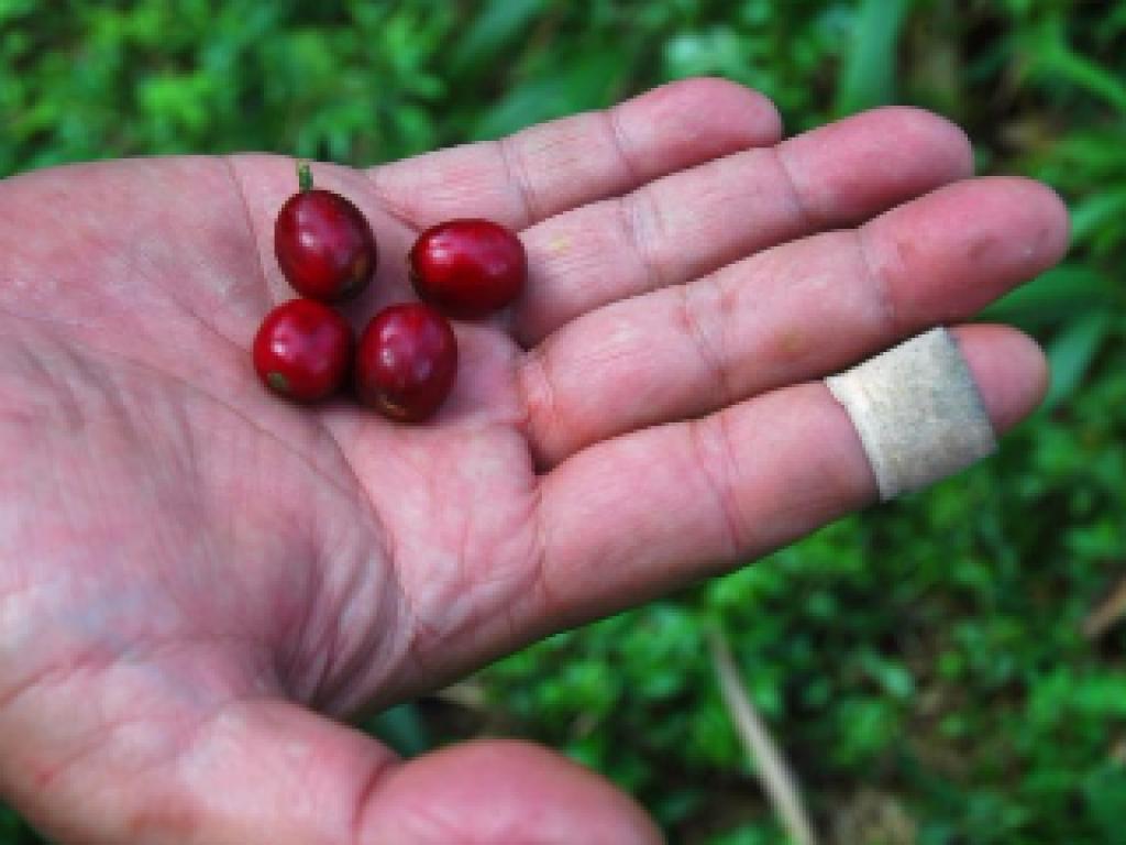 將好咖啡留在台灣 - 100%台灣原生豆