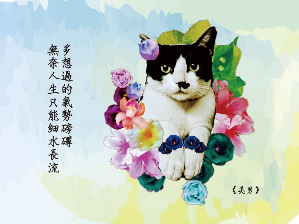 《願歲月無憂》原創詩畫明信片