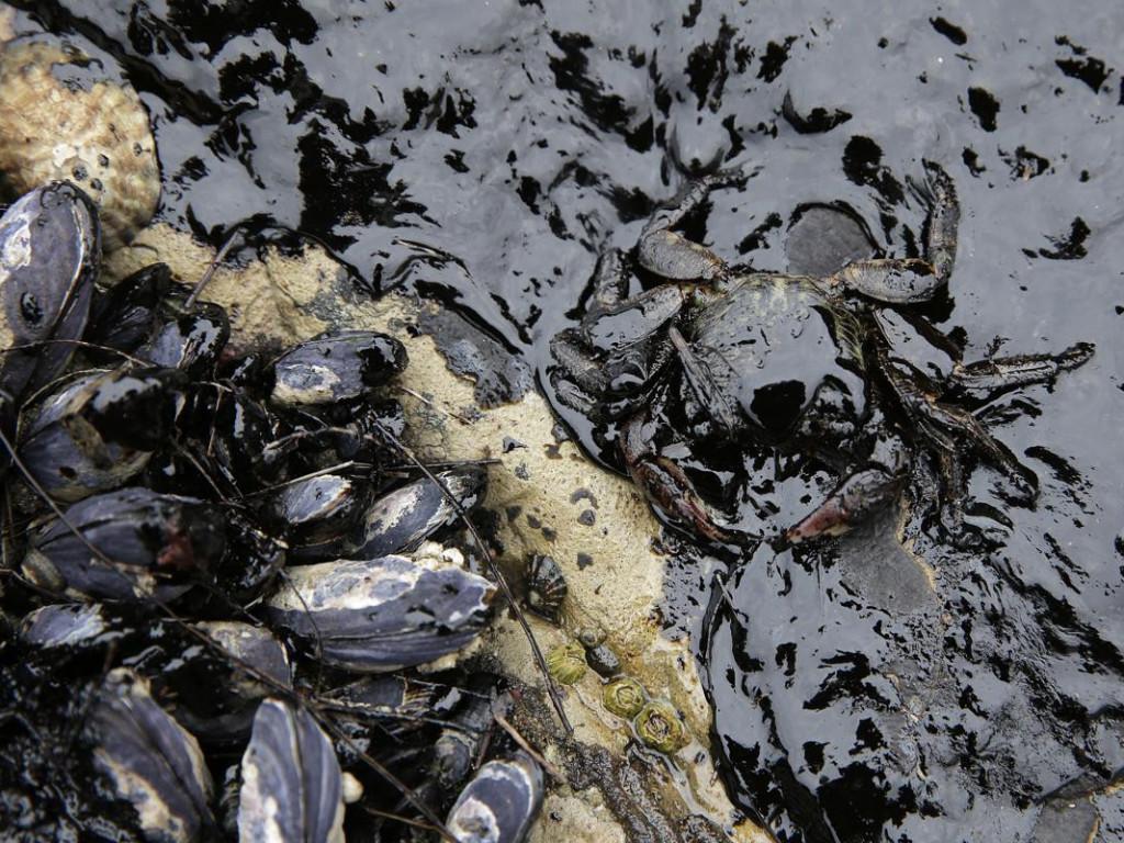 廢油回收 皂化地球 | Part 2