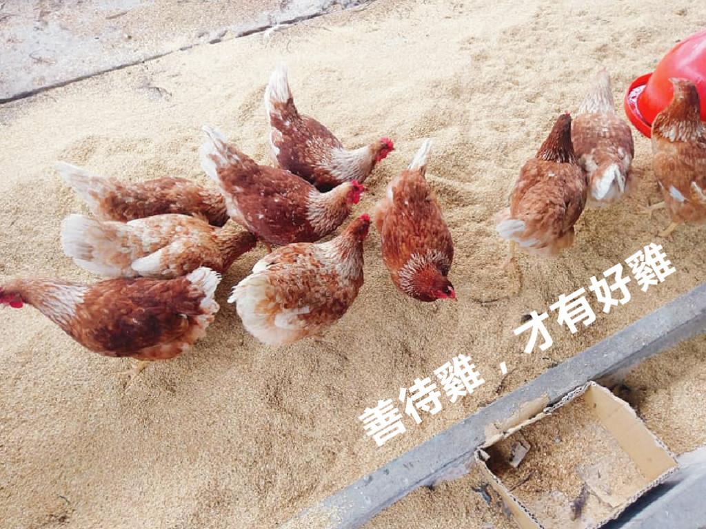 暮野尋籟雞舍|非籠飼、養好雞友善放牧系統建置