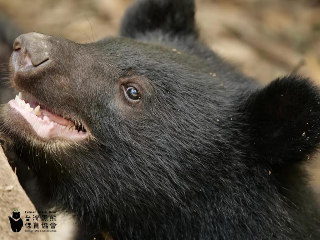 倡導黑熊保育,環島x策展計畫!