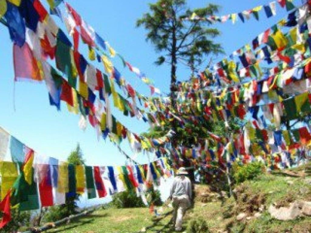 讓中文帶他們回家-流亡藏人的盼望