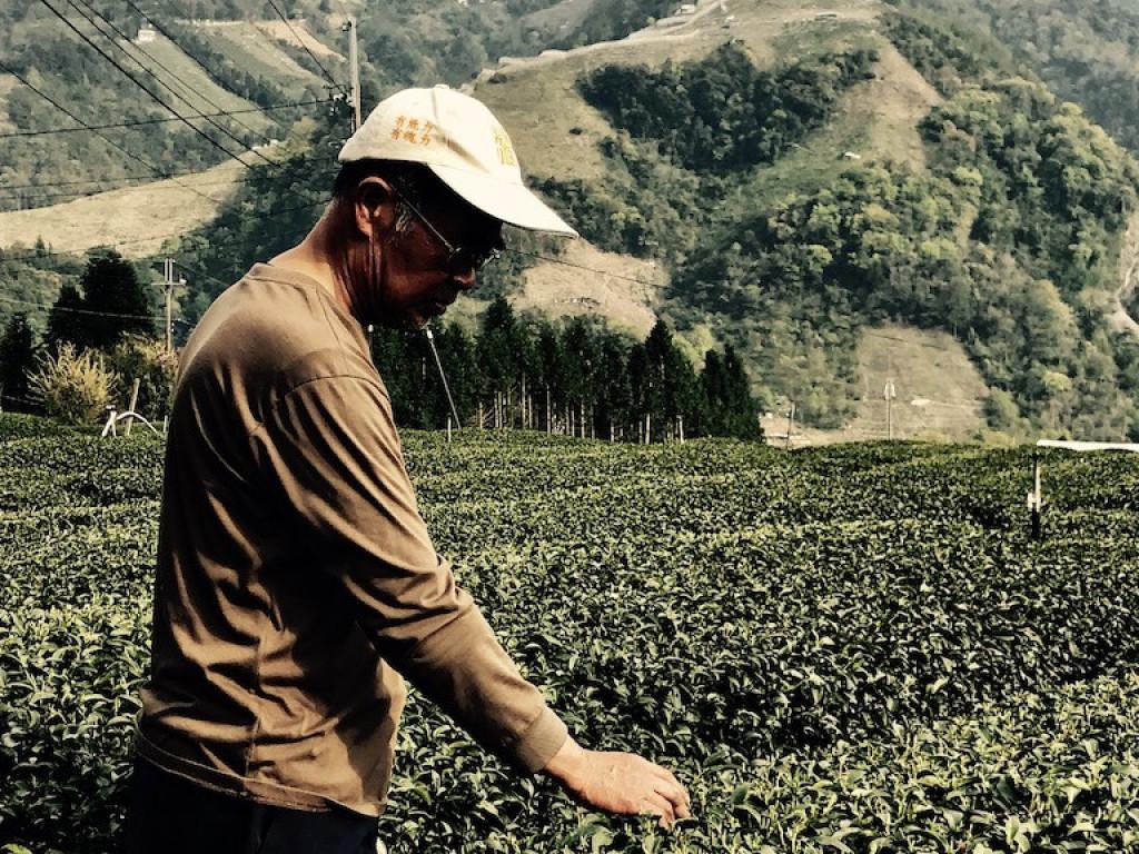 【眼鏡賣茶mai-cha】 自營之路 梨山茶農二代承志 直接賣好茶