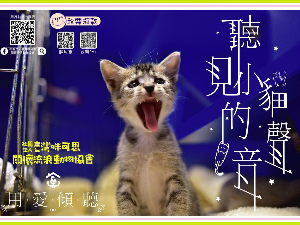 聽見小貓的聲音