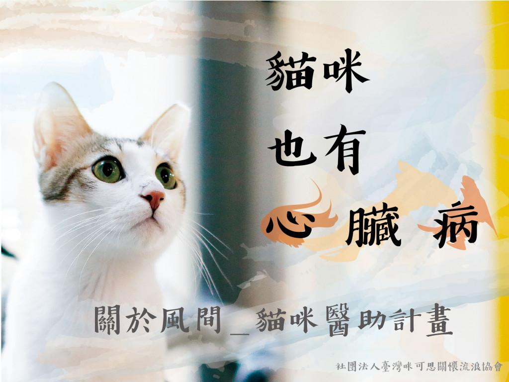我是一隻有「心臟病」的貓|貓咪醫療募資計畫
