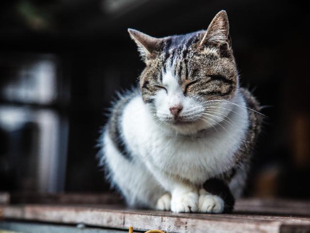 《貓·喃》-關注流浪貓,給他們一個溫暖的家
