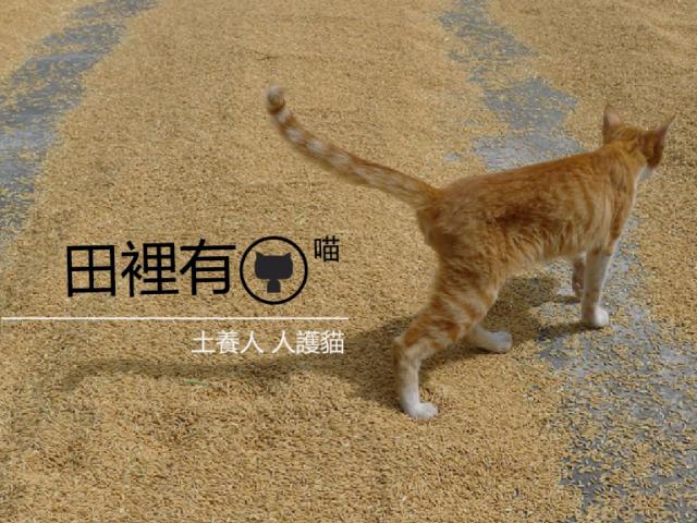 田裡有喵|讓貓貓加入農業,貓糞堆肥研究計畫